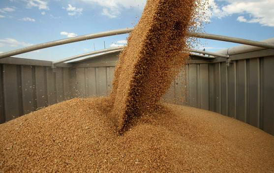 Аграрии Могилевской области намерены произвести не менее 1,3 млн т зерновых