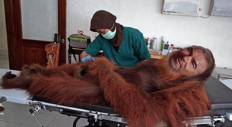 Снимка: К. Контрера: Джипито на маймуните в столичния зоопарк да се погрижи за Марешки