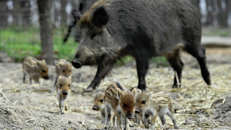 Ловци в Северна България излизат на протест срещу подготвяната забрана