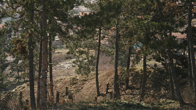 Масови кражби на дърва от гората край Тетевен – за