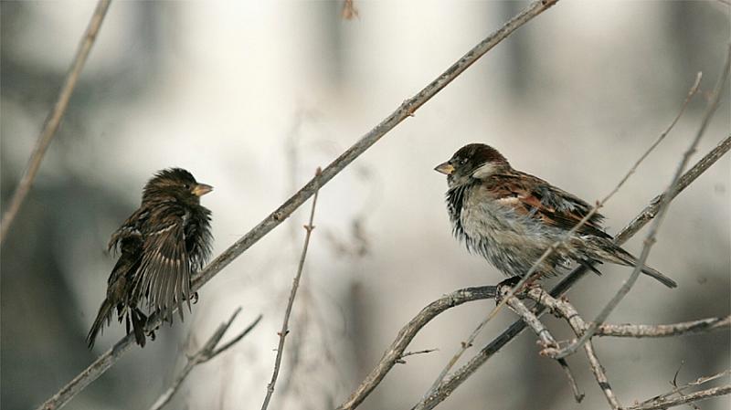 За втори път Дружество за защита на птиците организира броене