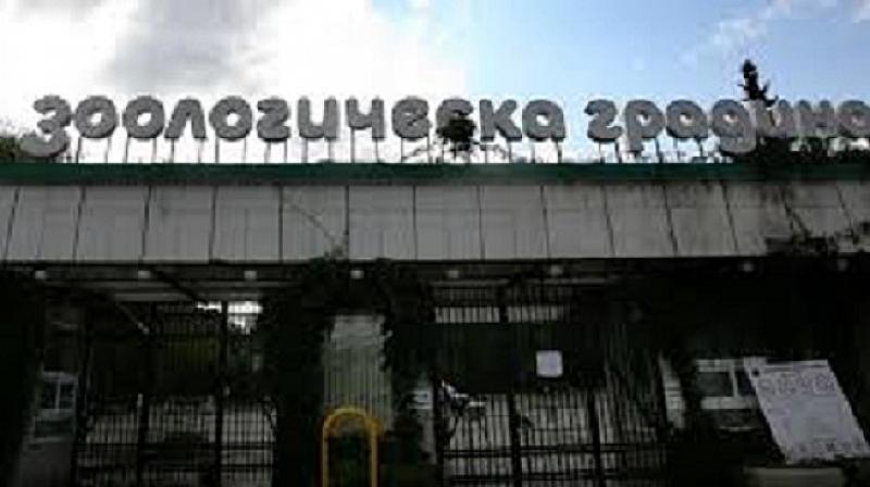 Входът за Зоологическата градина в София е безплатен днес, съобщиха