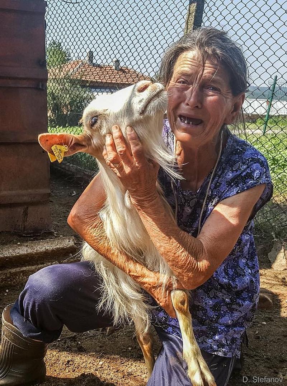 Животновъдите от Странджа се събират на протест заради умъртвяването на