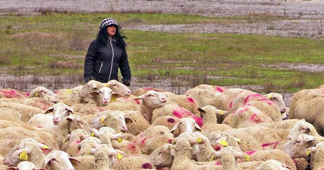 Изплащанията на обезщетенията за собствениците на умъртвените животни стартират.Българската агенция