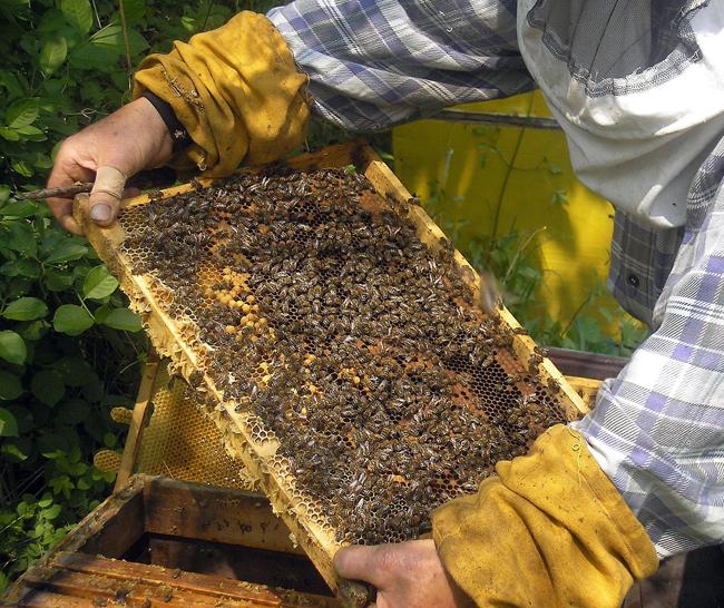 Недоволство сред пчеларите във Варненско. От бранша настояват за по-строг