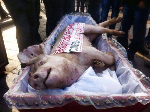 Свидната рожба на свинския модел го убива, гробът е готов