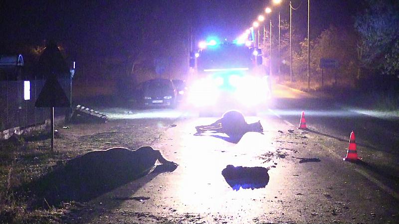 Безстопанствени коне предизвикаха тежка катастрофа на подбалканския път София-Бургас.28-годишно момиче