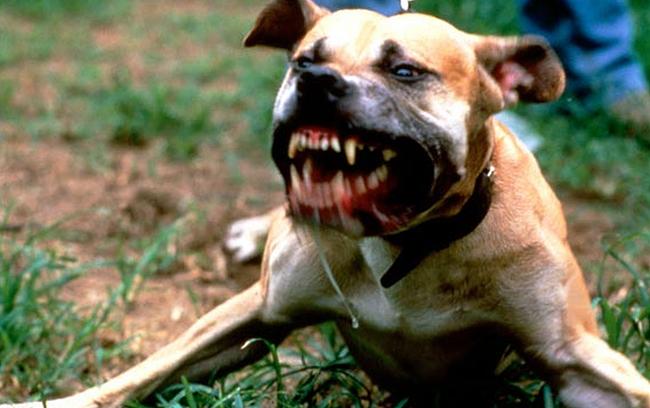 Нови правила за отглеждането на домашни кучета ще обсъждат депутатите