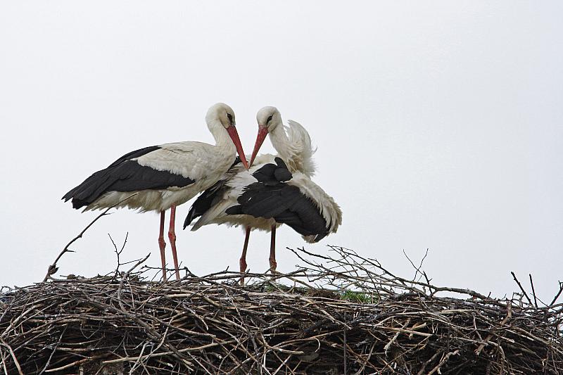 """Инициативите се част от проекта """"Живот за птиците"""", изпълняван съвместно"""