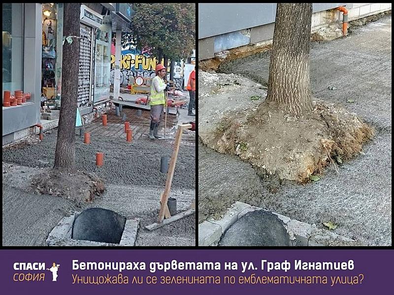 Резултат с изображение за София – градът на бетонираните дървета