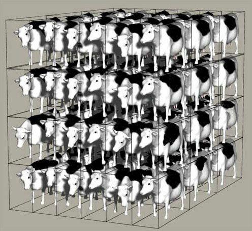 72_cows.jpg