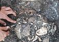 Откриха игла на 50 000 години