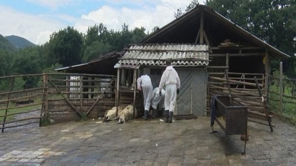 Депутатите обсъждат извънредно кризата с чумата