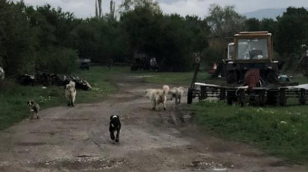 Първо във Фрог: 20-годишна студентка оцеля по чудо,  след като я нападнаха кучета в Пернишко