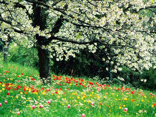 Резултат с изображение за април