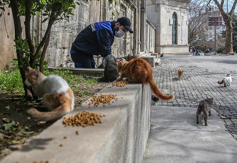 Турското правителство се погрижи за животните на улицата по време