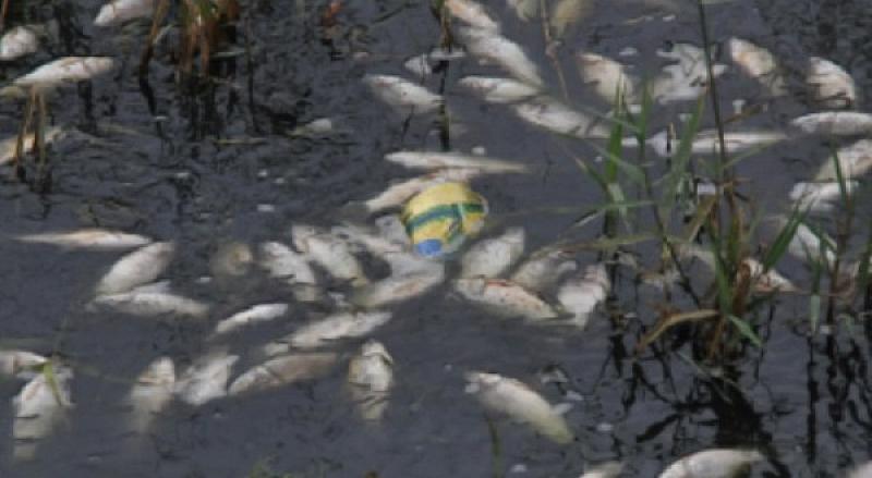 Преустановено е замърсяването на река Марица, а източникът на отровата