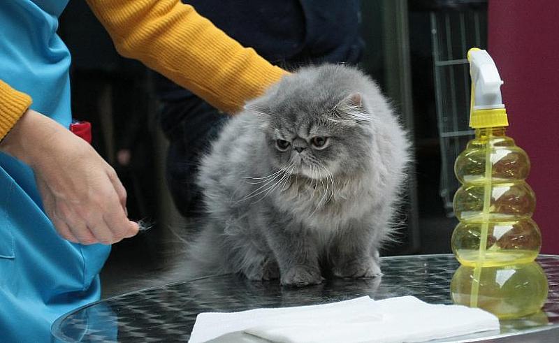 """Над 120 котки участват на международно изложение в музей """"Земята"""