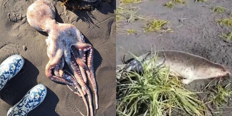 Скелети на тюлени, останки от октоподи и морски таралежи са