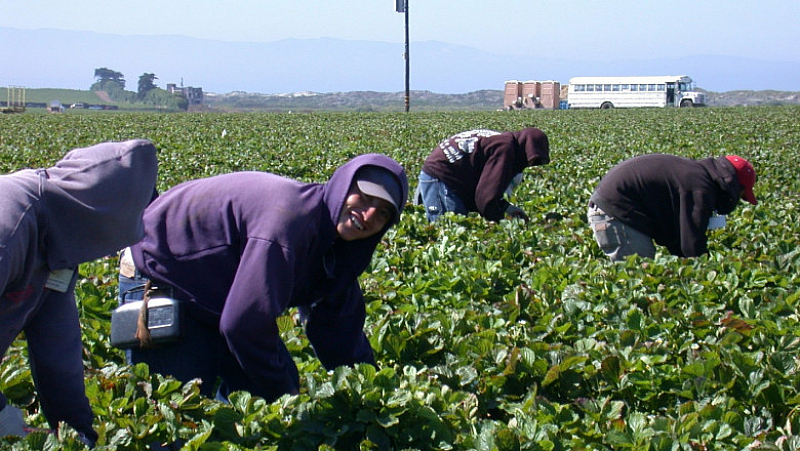 Германското правителство заяви, че забранява влизането на сезонни работници от