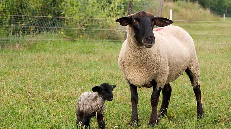 Овчарите са много кисели. Не ми се кефят, все гледат