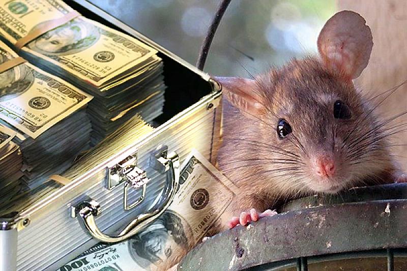 Да прощават мишките - в този текст ще бъдат споменати